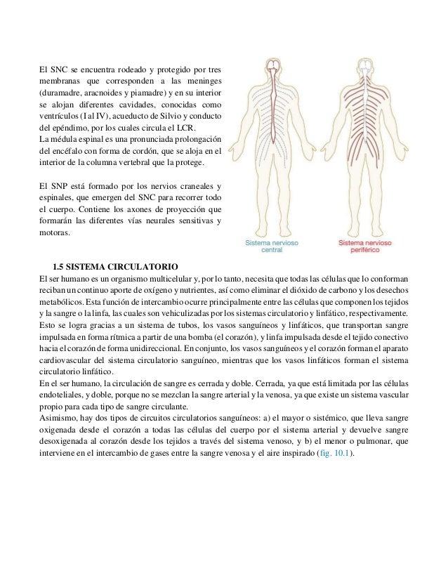 infarto acido urico recien nacido recetas para gente con gota cuanto es lo normal de acido urico