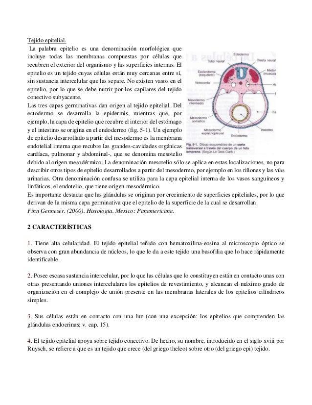 Hermosa Anatomía Tejidos Epiteliales Hoja De Respuestas Inspiración ...