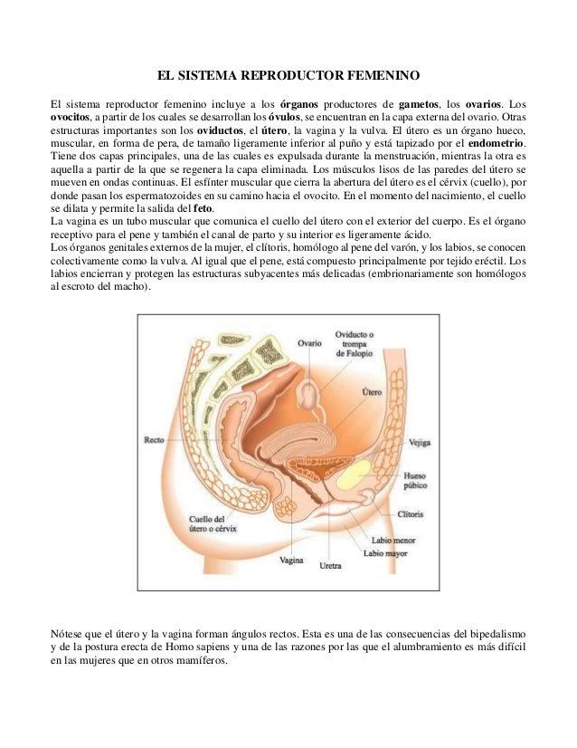 Antologia de Anatomia