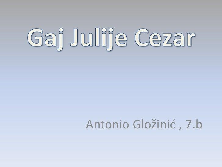 Gaj Julije Cezar<br />Antonio Gložinić , 7.b<br />