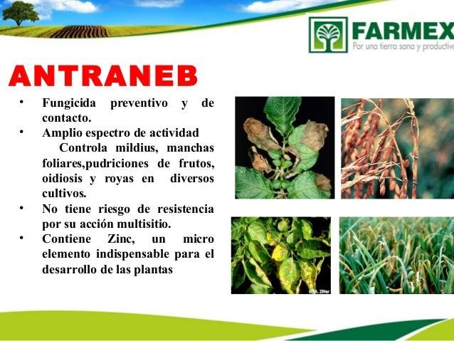 ANTRANEB• Fungicida preventivo y decontacto.• Amplio espectro de actividadControla mildius, manchasfoliares,pudriciones de...