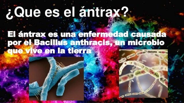 Antrax Slide 3