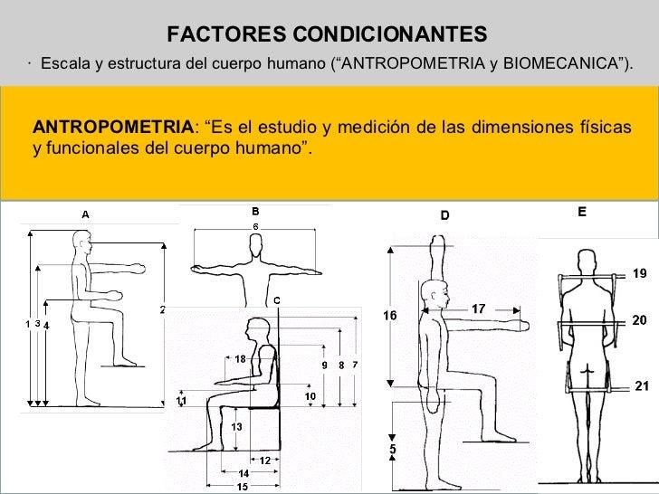 Antropometria y ergonom a for Medidas antropometricas del cuerpo humano