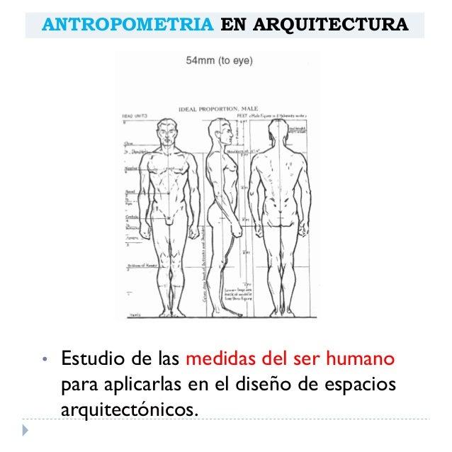 Antropometria arquitect nica for Medidas antropometricas del cuerpo humano