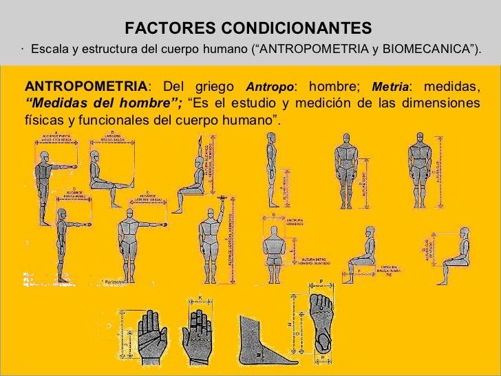 Antropometria y ergonom a for Antropometria de la vivienda
