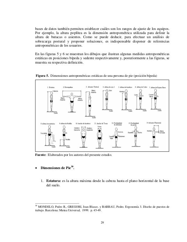 Antropometria Y Ergonomia