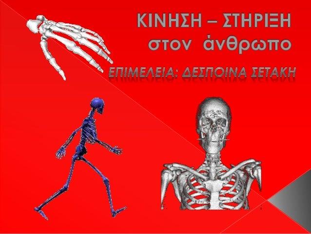 Το ερειστικό (σκελετικό) σύστημα του ανθρώπου αποτελείται περίπου από206 οστά, σχετίζεται άμεσα  με το μυϊκό, αλλά και μεά...