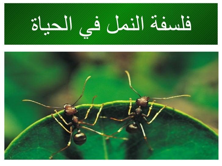 فلسفة النمل في الحياة