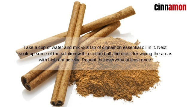 Say Goodbye To Ants Using These Natural Remedies Slide 3