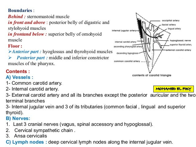 Anterior triangle of the neck part 1 External Jugular Vein Tributaries