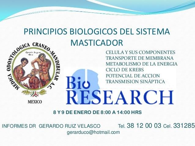 PRINCIPIOS BIOLOGICOS DEL SISTEMA                  MASTICADOR                                      CELULA Y SUS COMPONENTE...
