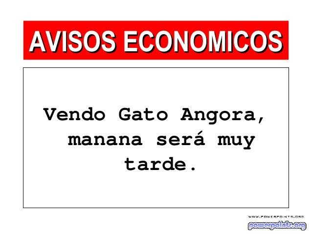 Vendo Gato Angora, manana será muy tarde. AVISOS ECONOMICOSAVISOS ECONOMICOS