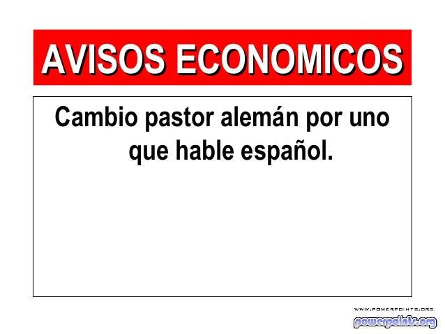 Cambio pastor alemán por uno que hable español. AVISOS ECONOMICOSAVISOS ECONOMICOS