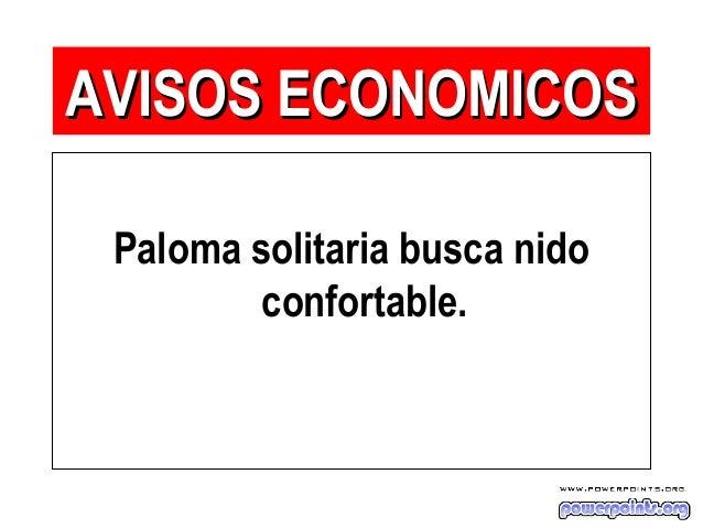 Paloma solitaria busca nido confortable. AVISOS ECONOMICOSAVISOS ECONOMICOS