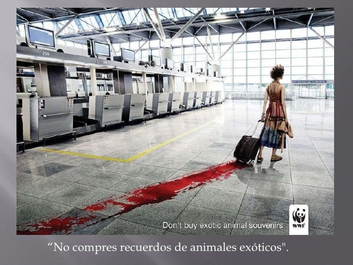 """"""" No compres recuerdos de animales exóticos""""."""