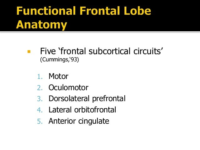 """functional subdivisions of the orbito frontal cortex The anterior cingulate cortex (acc) lies in a unique position in the brain, with connections to both the """"emotional"""" limbic system and the """"cognitive"""" prefrontal cortex thus, the acc likely has an important role in integration of neuronal circuitry for affect regulation and can be identified as a distinctive region in understanding ."""