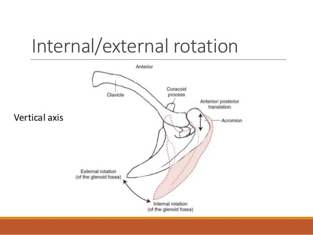 biomechanics of the shoulder 1 baseball biomechanics to facilitate the treatment and rehabilitation of shoulder injuries, this chapter delves into the biomechanics of the baseball throw, including the different phases of throwing, the most common causes of injury, and the tissues involved.