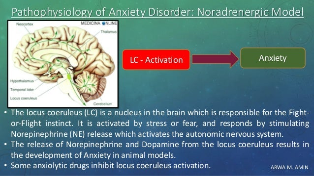 ARWA M. AMIN Pathophysiology of Anxiety Disorder: Noradrenergic Model • The locus coeruleus (LC) is a nucleus in the brain...
