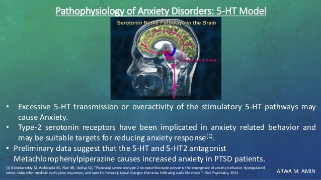 ARWA M. AMIN Pathophysiology of Anxiety Disorders: 5-HT Model • Excessive 5-HT transmission or overactivity of the stimula...