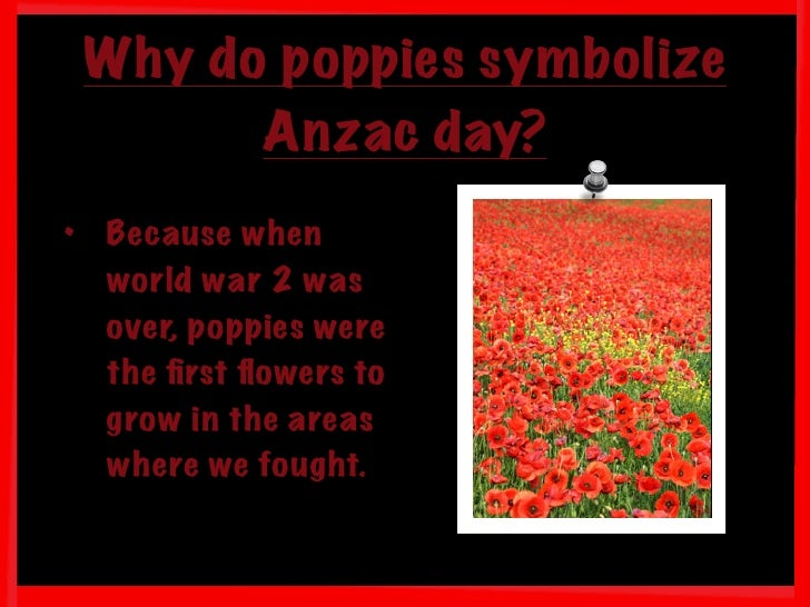 What Does A Poppy Flower Symbolize Images Flower Decoration Ideas