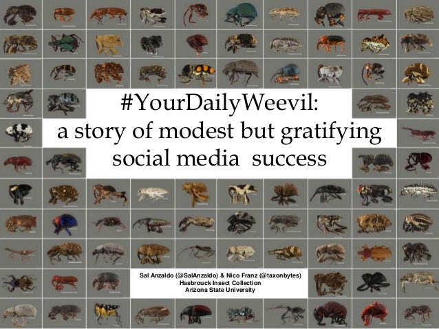 #YourDailyWeevil: a story of modest but gratifying social media success Sal Anzaldo (@SalAnzaldo) & Nico Franz (@taxonbyte...