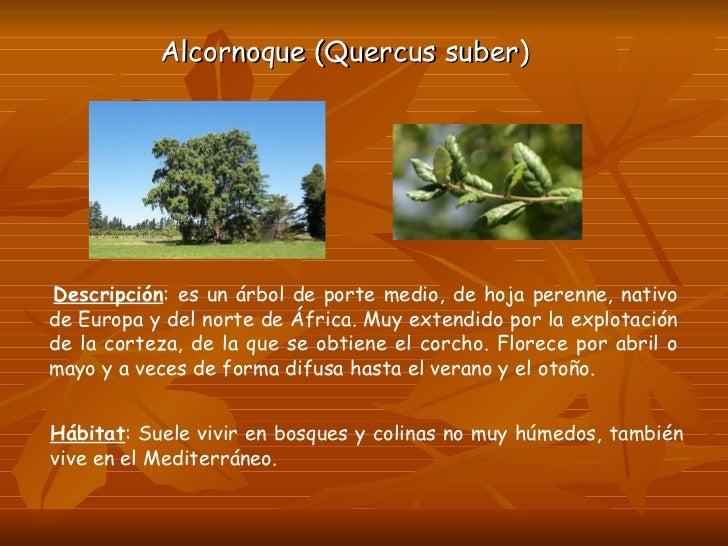 A o mundial bosques 2011 - Propiedades del corcho ...
