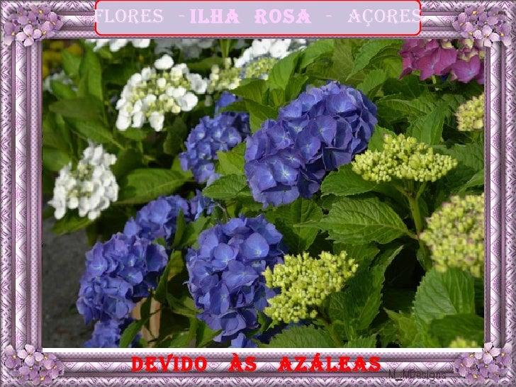 Flores - ilha rosa - açores   devido   às   azáleas