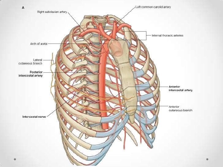 Aorta toracica y abdominal