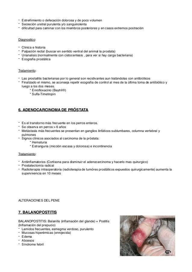 Patologias del Aparato reproductor en perros y gatos