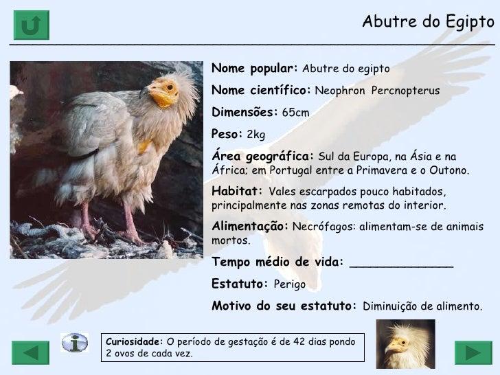Extremamente Ap 5 g animais em vias de extinção 2009-2010 YY81