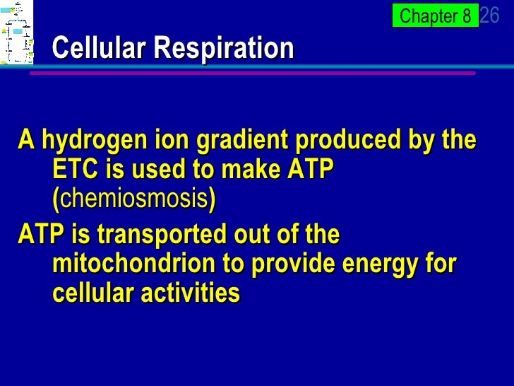 ap bio chapter 8 The reaction always goes in the direction toward chemical equilibrium, the free energy change of the reaction is the same as the reaction in the absence of the enzyme, and the reaction always goes in the direction toward chemical equilibrium.