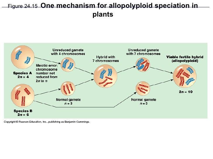 Ap Chapter 24 The Origin Of Species