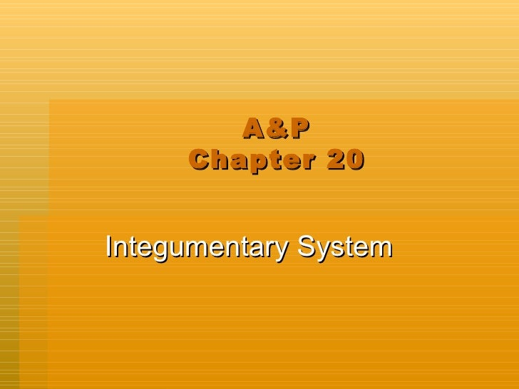 A&P Chapter 20 Integumentary System
