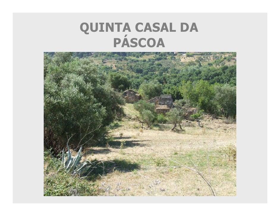 QUINTA CASAL DA     PÁSCOA