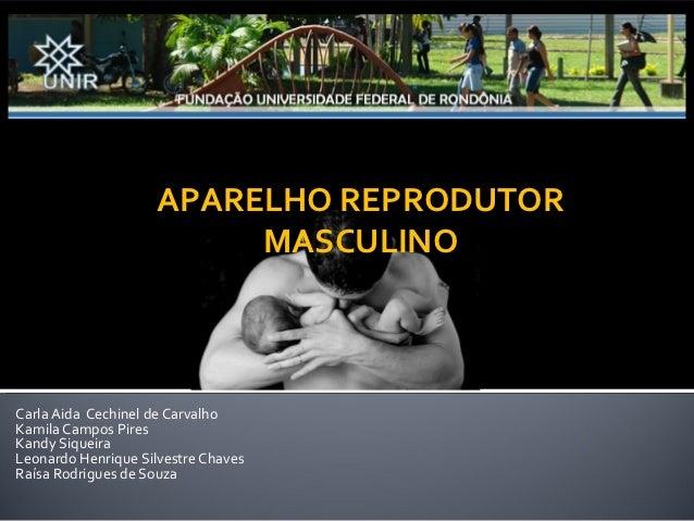 Núcleo de Saúde                                     Curso de Medicina                     APARELHO REPRODUTOR             ...