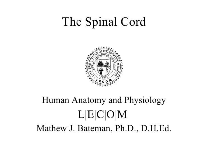 A&p 13 spinal cord