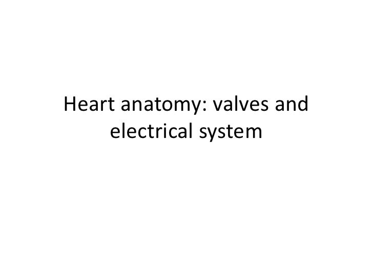 Heart anatomy: valves and electrical system<br />