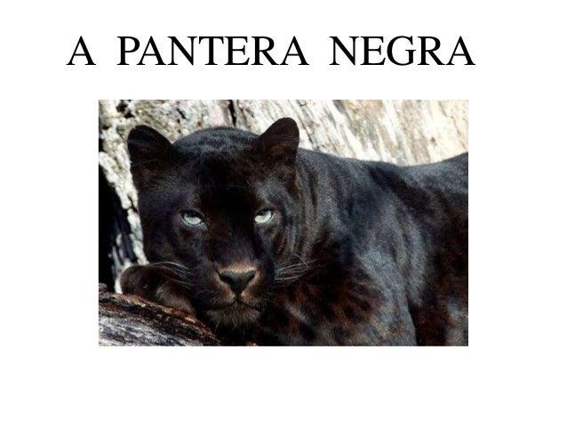 A PANTERA NEGRA