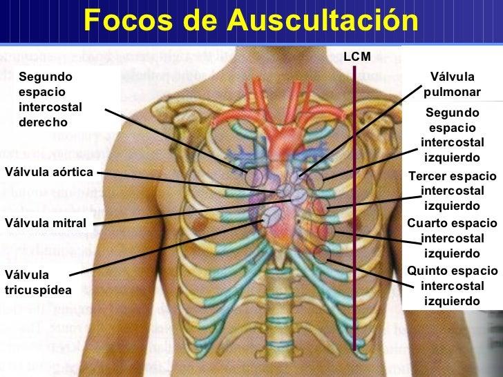 aparato cardiovascular1