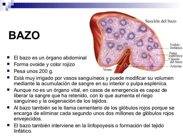 Aparato circulatorio-1193160037735642-1