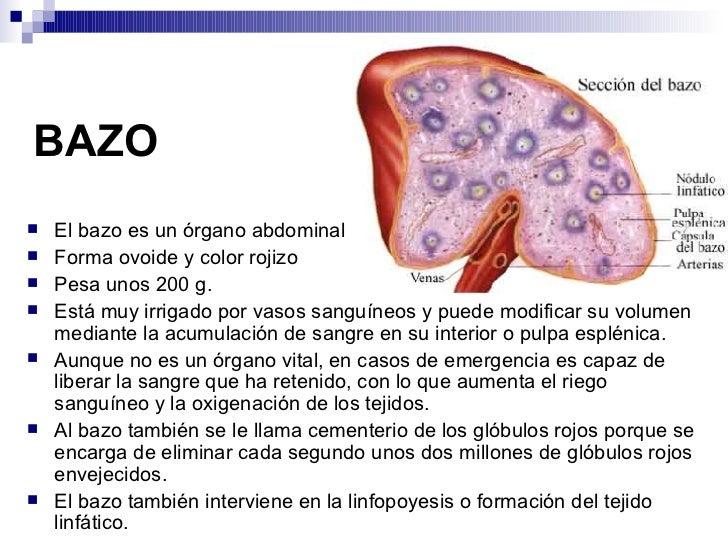 Excelente Donde Se Encuentra El Bazo Molde - Anatomía de Las ...