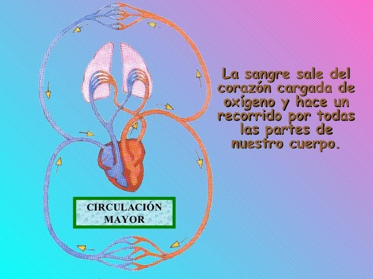 Circuito Que Realiza La Sangre : Aparato circulatorio
