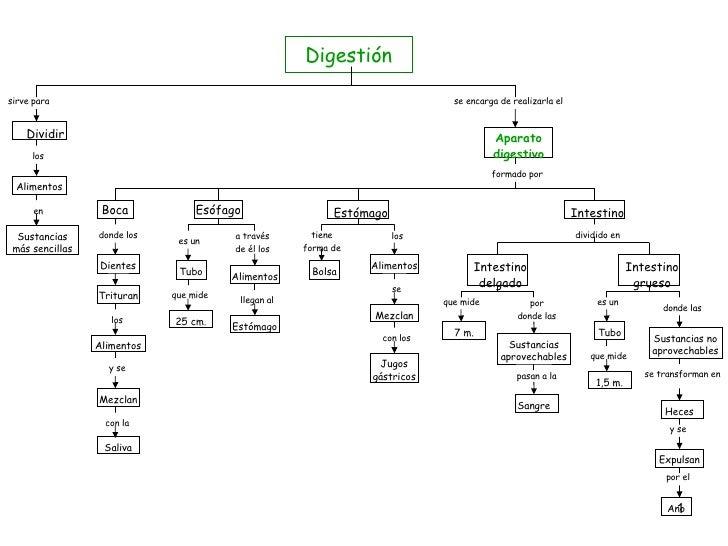 Digestión sirve para Dividir los Alimentos en Sustancias más sencillas se encarga de realizarla el Aparato digestivo forma...