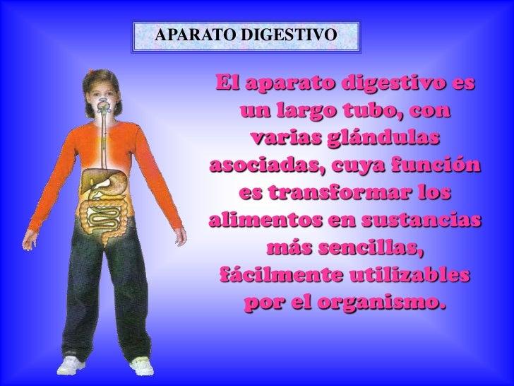 APARATO DIGESTIVO     El aparato digestivo es       un largo tubo, con        varias glándulas    asociadas, cuya función ...
