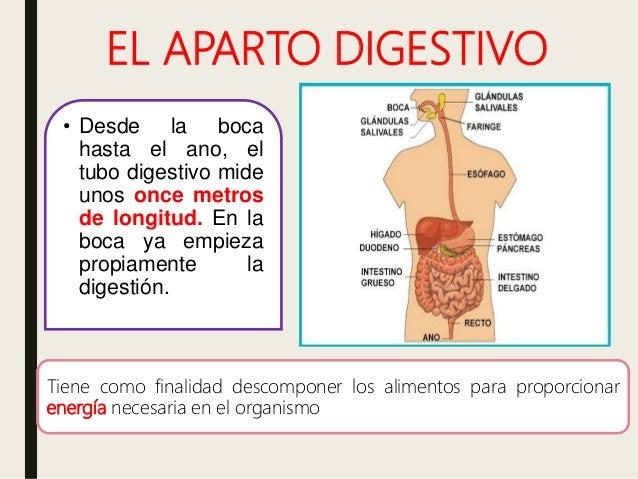 Aparato Digestivo Características Ser Humano Y Animales