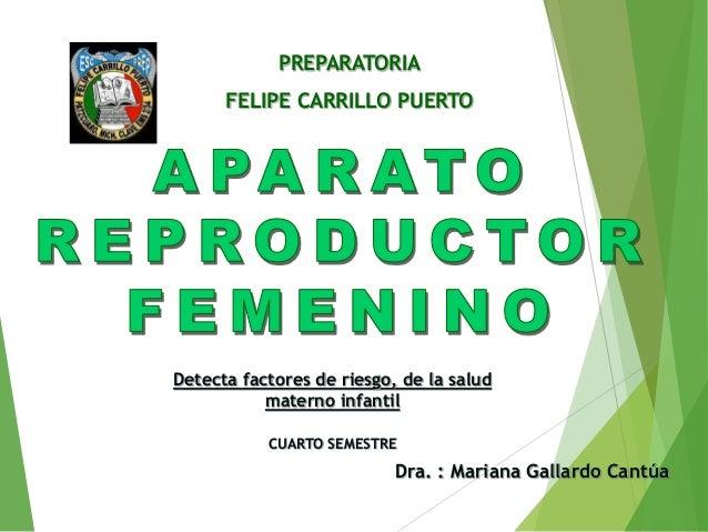 PREPARATORIA FELIPE CARRILLO PUERTO Dra. : Mariana Gallardo Cantúa Detecta factores de riesgo, de la salud materno infanti...