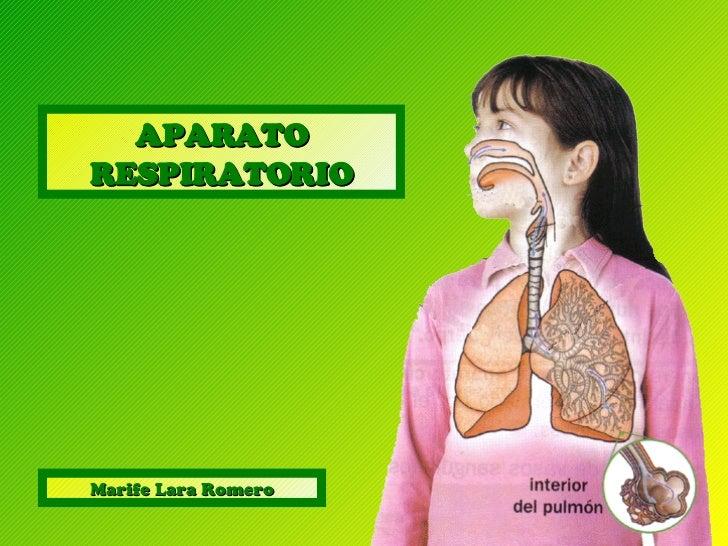 APARATO RESPIRATORIO Marife Lara Romero