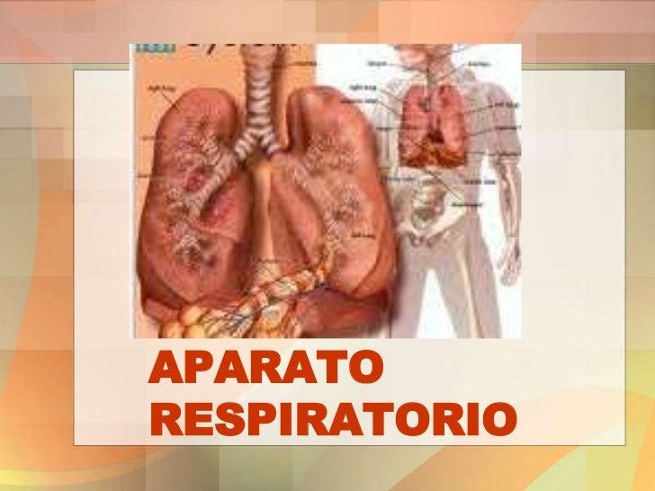 aparato respiratorio22