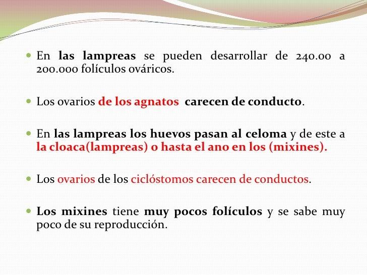 Anatomia del Aparato Urogenital de Peces. De: José Romero Profesor.