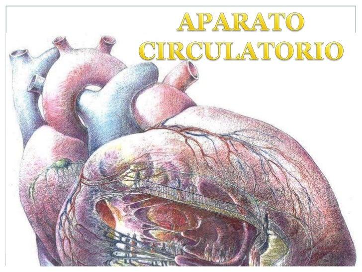 APARATO CIRCULATORIO<br />